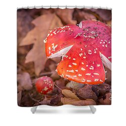 Magic Mushroom Shower Curtain by Ray Warren