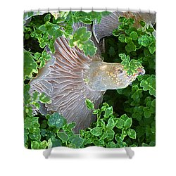 Magical Places Shower Curtain