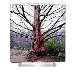 Shower Curtain featuring the photograph Magic Tree by Nina Silver