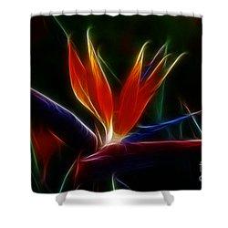 Magical Bird Of Paradise Shower Curtain by Sandra Bronstein
