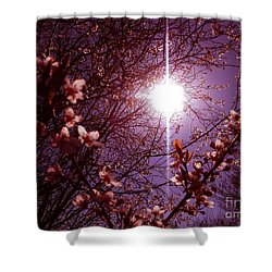Shower Curtain featuring the photograph Magical Blossoms by Vicki Spindler