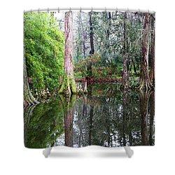 Magical Cypress Swamp Shower Curtain by Carol Groenen