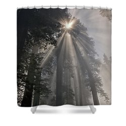 Magical Morning Shower Curtain by Betty Depee