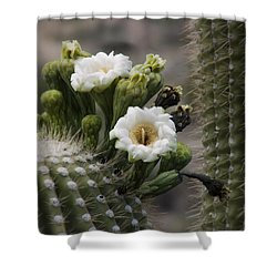 Shower Curtain featuring the photograph Magnificant Bloom Of The Saguaro by Lucinda Walter
