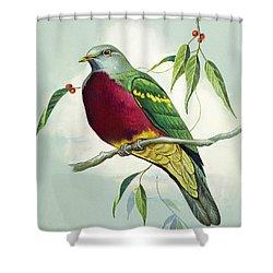 Magnificent Fruit Pigeon Shower Curtain by Bert Illoss