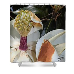 Magnolia Magnicence  Shower Curtain