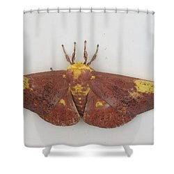 Magnificent Moth Shower Curtain