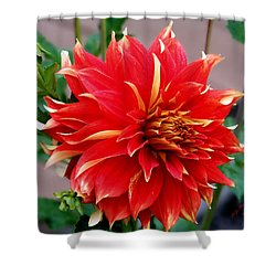 Shower Curtain featuring the photograph Magnifique by Jeanette C Landstrom