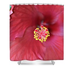 Magnolia 5  Shower Curtain