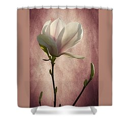 Shower Curtain featuring the photograph Magnolia by Ann Lauwers