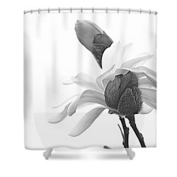 Magnolia Bloom 1 Shower Curtain by Tammy Schneider