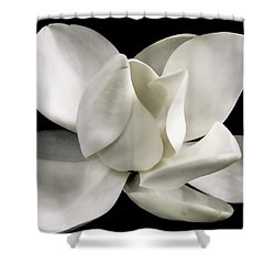 Magnolia Bloom Shower Curtain by David Patterson