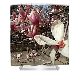Shower Curtain featuring the photograph Magnolia Branches by Caryl J Bohn