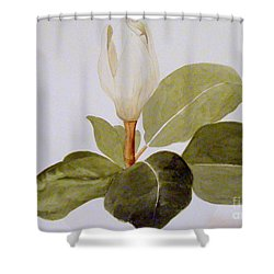 Shower Curtain featuring the painting Magnolia Bud II by Nancy Kane Chapman