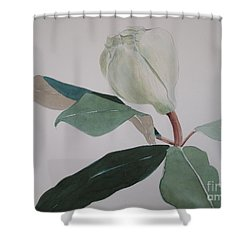 Shower Curtain featuring the painting Magnolia Bud by Nancy Kane Chapman