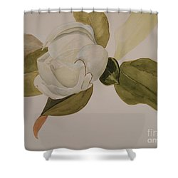 Shower Curtain featuring the painting Magnolia California by Nancy Kane Chapman