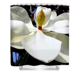 Magnolia Carousel Shower Curtain by Karen Wiles