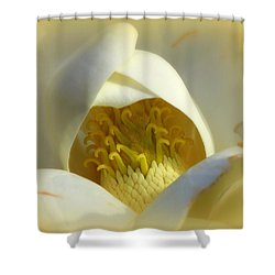 Magnolia Cloud Shower Curtain by Karen Wiles