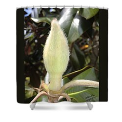 Magnolia - Essence Shower Curtain