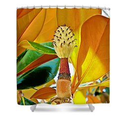 Shower Curtain featuring the photograph Magnolia Flower by Olga Hamilton