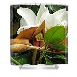 Shower Curtain featuring the photograph Magnolia Flowers - Flower Of Perseverance by Ella Kaye Dickey