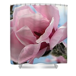 Magnolia In Spring Shower Curtain