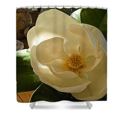 Shower Curtain featuring the photograph Magnolia by Nancy Kane Chapman