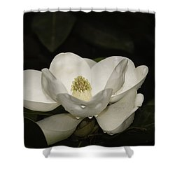 Magnolia Shower Curtain by Penny Lisowski