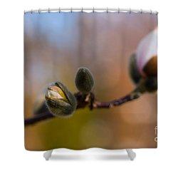 Magnolia Season II Shower Curtain by Mary  Smyth