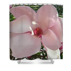 Magnolia Surprise Shower Curtain by Emmy Marie Vickers