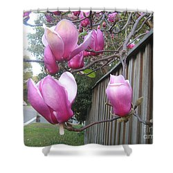 Shower Curtain featuring the photograph Magnolias In Bloom by Leanne Seymour