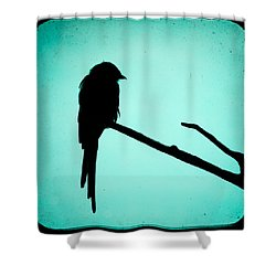 Magpie Shrike Silhouette Shower Curtain by Gary Heller