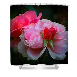 Shower Curtain featuring the photograph Maiden Mother Crone by Patricia Babbitt