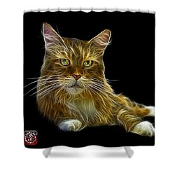 Maine Coon Cat - 3926 - Bb Shower Curtain by James Ahn