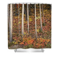 Majestic Autumn In The Grand Tetons Shower Curtain by Sandra Bronstein