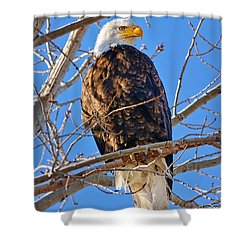 Majestic Bald Eagle Shower Curtain