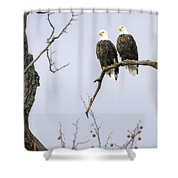 Majestic Beauty 1 Shower Curtain by David Lester