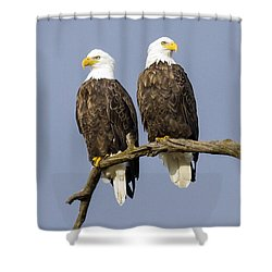 Majestic Beauty  6 Shower Curtain by David Lester