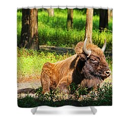 Majestic Bison Shower Curtain by Mariola Bitner