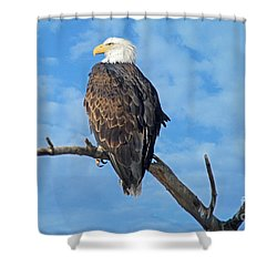 Majestic Shower Curtain by Bob Hislop