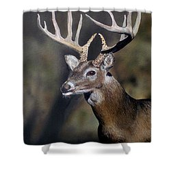 Majestic Buck Shower Curtain by Todd Spaur