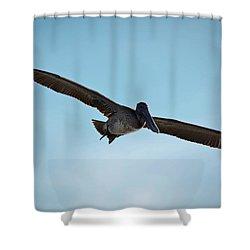 Majestic Flight Shower Curtain