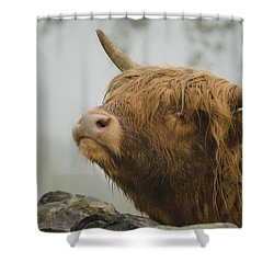 Majestic Highland Cow Shower Curtain