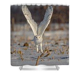 Majestic Snowy Shower Curtain