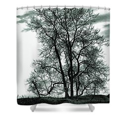Shower Curtain featuring the photograph Majesty by Lauren Radke