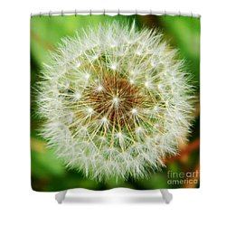 Make A Wish Shower Curtain by Andrea Anderegg