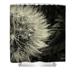 Make A Wish Shower Curtain by Clare Bevan