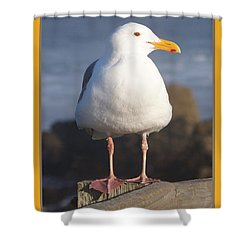 Make Sure You Get My Good Side Poster Shower Curtain by Barbara Snyder