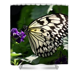 Shower Curtain featuring the photograph Malabar Tree Nymph  by Suzanne Stout