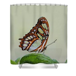 Malachite Butterfly #5 Shower Curtain by Judy Whitton